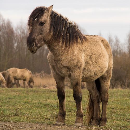 wild_horse.jpg